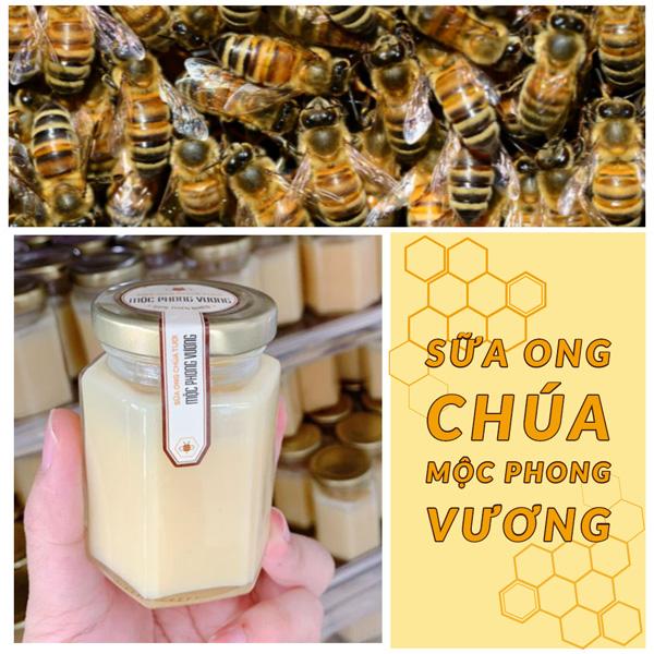 Sữa Ong Chúa Mộc Phong Vương
